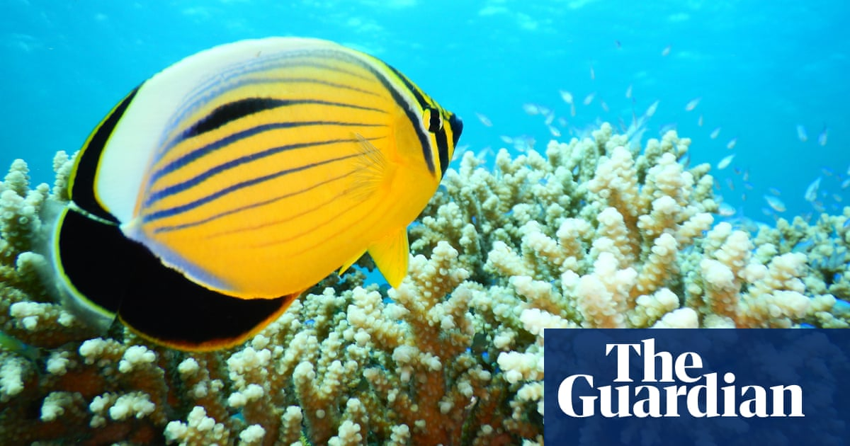 Red Sea corals' heat tolerance offers hope for climate crisis