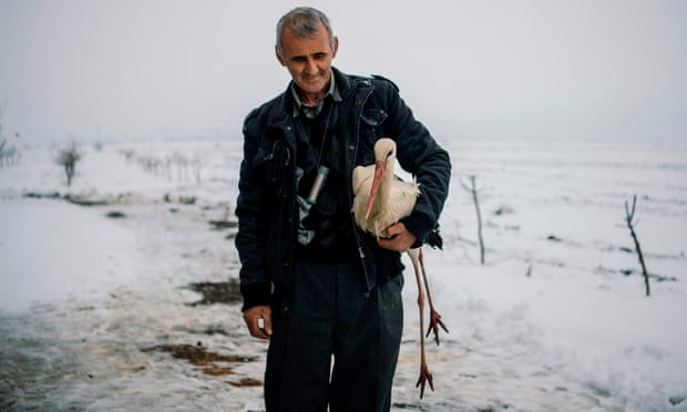 Bulgarians rush to save a phalanx of distressed, frozen storks