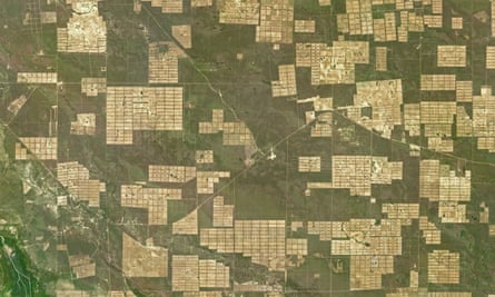 In the Gran Chaco deforestation tends to leave large rectangular clearings that reflect careful surveying by large-scale cattle-ranching operations.