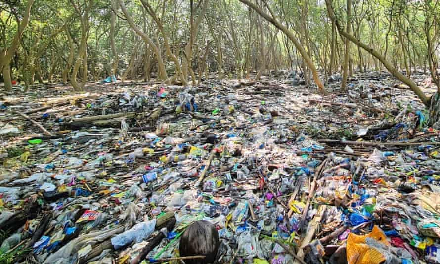 Manila Bay's mangroves and mudflats are threatened by plastic pollution