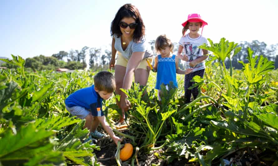 The Engelbach family find a squash at the Underwood Family Farm outside Oxnard, California.