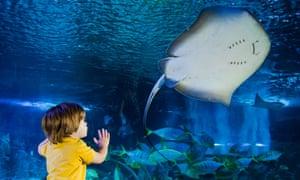A child, his hands pressed on the glass, looks at fish in Sea Life Brighton aquarium.