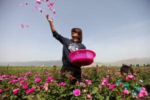 Salem al-Zarda at his rose planation in the Bekaa valley.