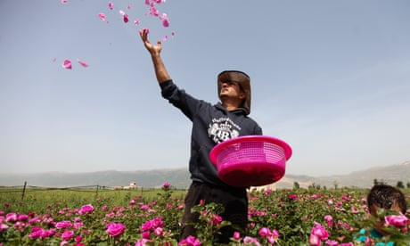 Rose seeds from Syria: the refugee family cultivating a new life