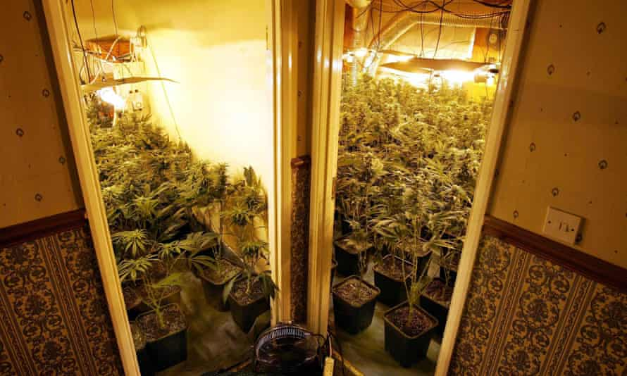 A cannabis factory in London that was run by a Vietnamese gang