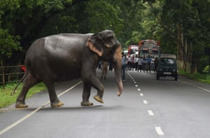 Commuters watch a wild elephant cross a road as it tries to escape to higher ground at flood affected Kaziranga National Park in Assam, India