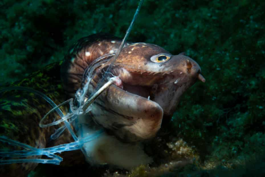 Kerim Sabuncuoglu's prize-winning photograph of a dead moray eel entangled in an abandoned 'ghost' fishing line.