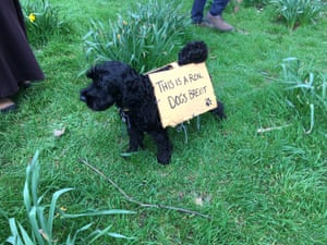 Dog wearing 'dog's Brexit' sign