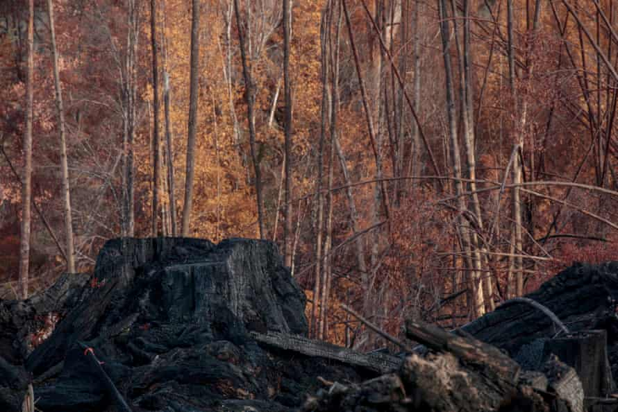 Tree stumps