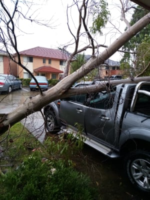 A tree from Peter Kranz's property lies collapsed on his neighbour's car following wild weather in Morisset, NSW, on Sunday 21 March 2021. Nobody was injured.