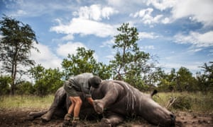 South Africa has seen a record surge in rhino poaching.