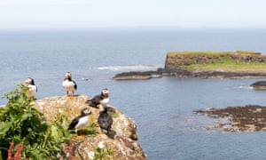 Puffins on Lunga, one of the Treshnish Isles.