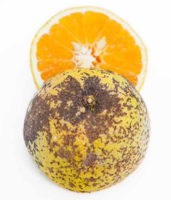 An orange with spots.