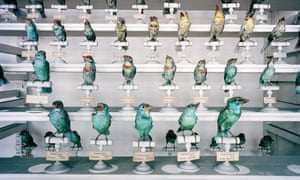 How We See Animals Muséum National D'Histoire Naturelle, Paris, France 1982 Colour photograph by Richard Ross © the artist