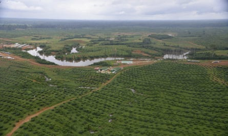 An oil palm plantation in Kango, Gabon