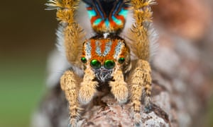 Spiders | Environment | The Guardian