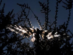 Los Angeles, US: A butterfly lands on a tree