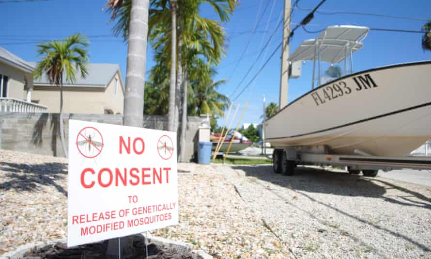 The prospect of getting rid of the disease-carrying pest not enough to ease neighborhood's concerns as 'NO CONSENT' signs are everywhere in Key West, Florida.