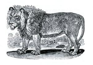 A 'Numidian' lion