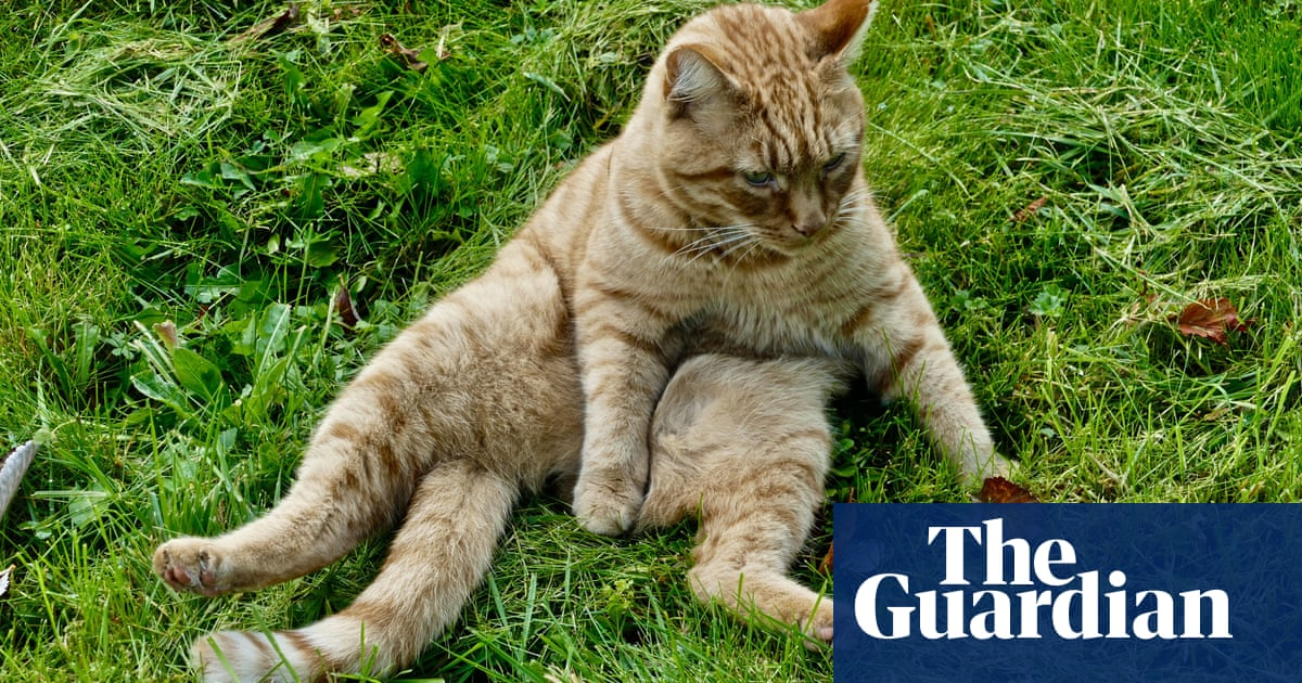 UK has almost 250,000 stray cats, first study estimates