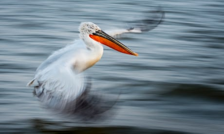 The British Ecological Society photography competition – in pictures