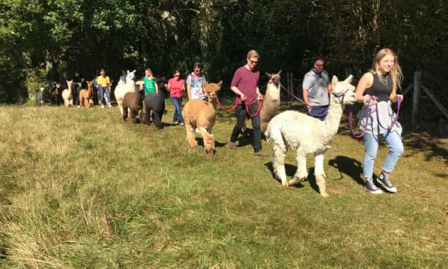 Spring Farm Alpacas