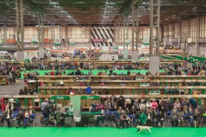 Competition rings and stalls of dogs in hall 5