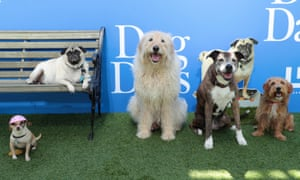 Dogs attend world premiere in Los Angeles