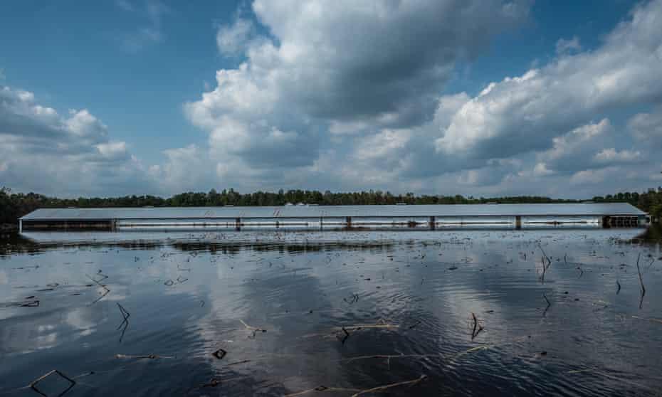 A flooded farm in Wallace, North Carolina.
