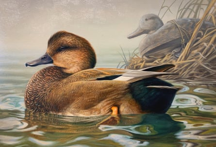 A swimming gadwall drake with an old wooden decoy resting in the grass in the background.