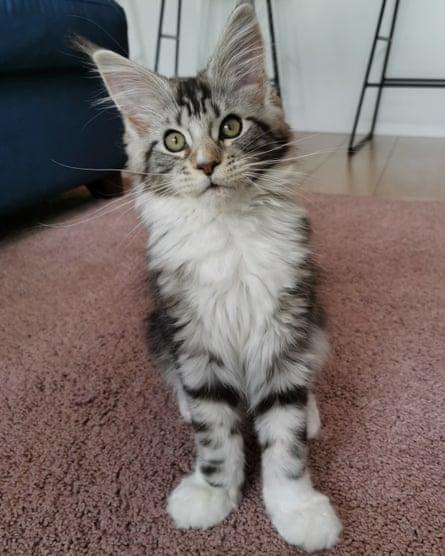 Selina's kitten Pip