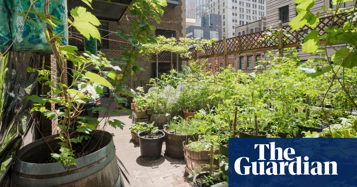 A garden at Ground Zero: what I learned growing an oasis in the shadow of 9/11