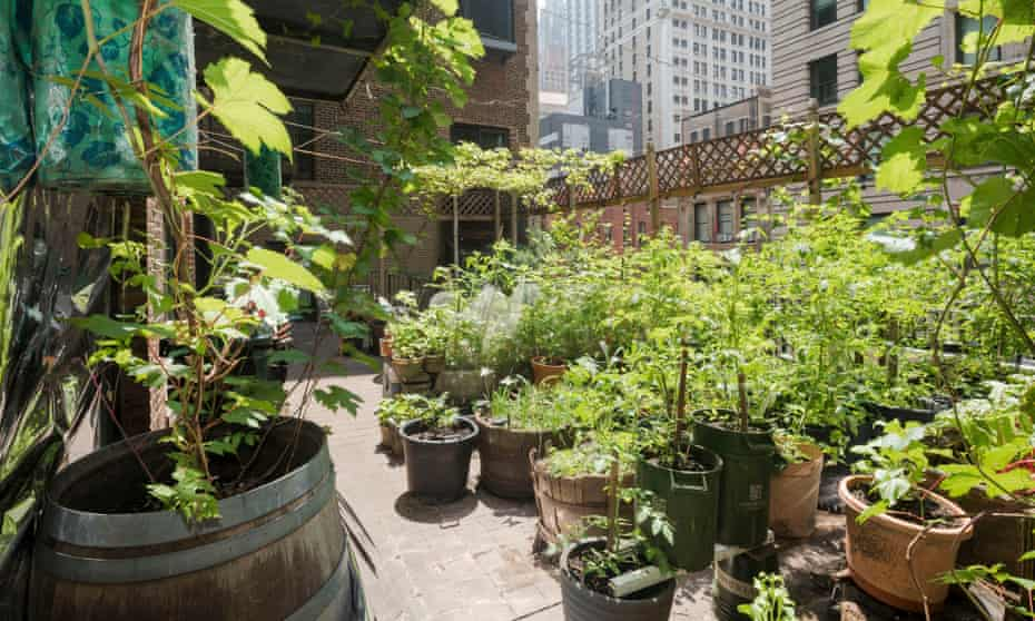 The garden designed by Paul Greenberg on his terrace in New York.