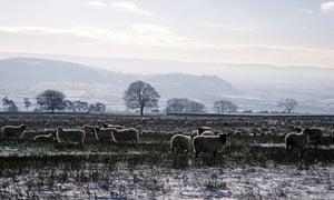 Sheep on snowy field bredon hill