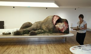 Elephant in the room … a sculpture of a dead elephant at the Musee de l'Homme in Paris