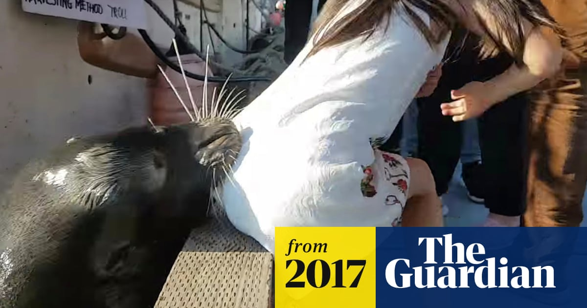 Sea lion drags girl into the water - video | World news | The Guardian