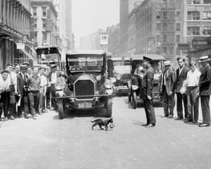 Mother cat Blackie halts traffic as she transports her five kittens, one by one, across Lafayette Street in lower Manhattan.