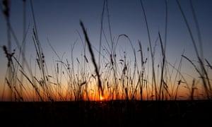 Australian native grass at sunset