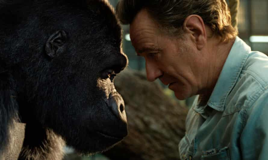 Bryan Cranston with a gorilla named Ivan, voiced by Sam Rockwell, in a scene from The One and Only Ivan.
