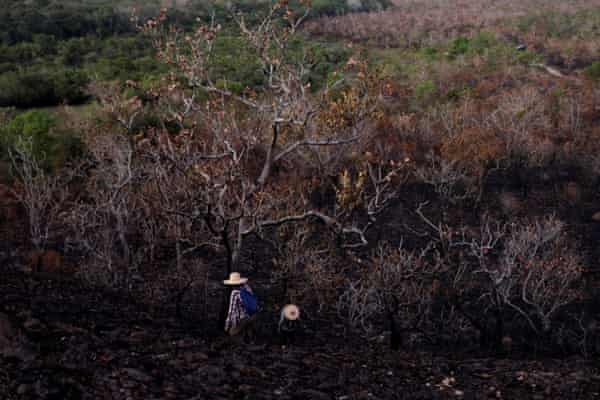 Biologists, who are researching a burned area of the Amazon forest in Alter do Chão, in Santarém.