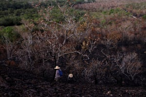 Biologists, who are researching a burned area of the Amazon forest in Alter do Chao, in Santarem.