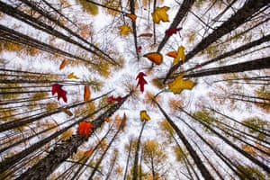 Autumn scenes in a forest in Yichun, Heilongjiang province, China