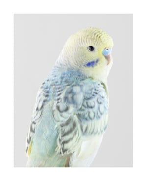 Coral. Photograph on archival fibre-based cotton rag paper, 2019 (112 x 89cm).