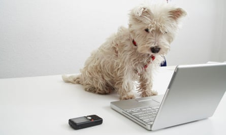 Dog sitting on desk in front of laptop