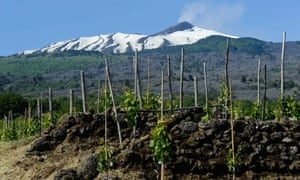 Underneath the volcano: vineyards in the shadow of Mount Etna.