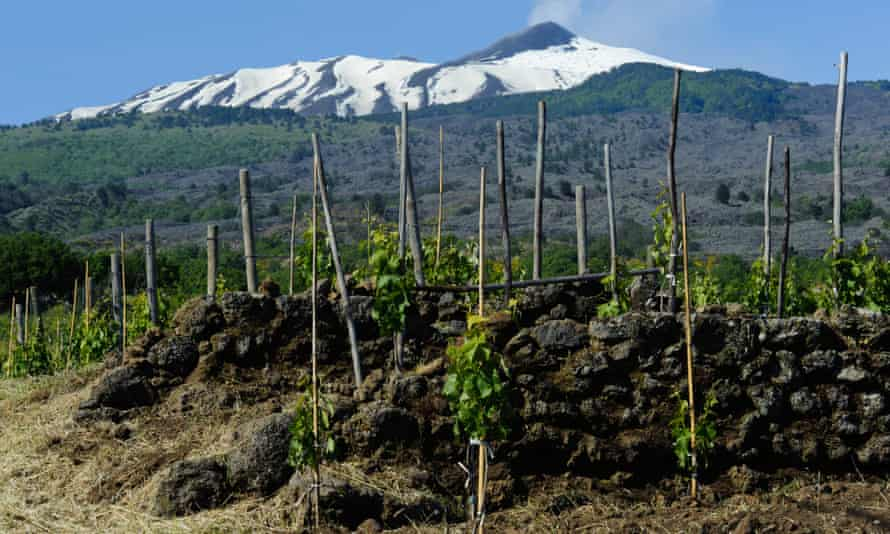 A vineyard near Mt Etna, Sicily