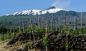 Dramatic location: a vineyard on the slopes of Mount Etna, Sicily.