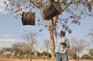 Maurice Kaduka Lukaro, 54, inspects his beehives. His region of Kenya has been ravaged by drought, but for three years he has been involved in a World Vision land management programme to plant and retain acacia trees. He says the trees reduce the topsoil blowing away, boost the soil with organic matter and provide shade to livestock, which drop manure. 'I used to harvest eight bags of maize. But last year my harvest shot to 25 bags of maize,' he says