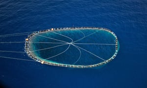 A bluefin tuna cage being towed by an Italian fishing boat in the Mediterranean.