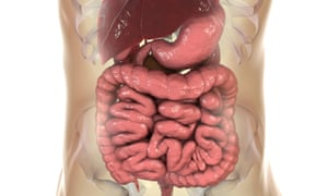 Illustration of the digestive system
